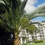 Club Med Da Balaia 23